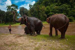 Słonie w Tajlandii